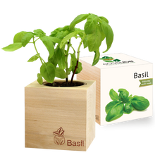 Load image into Gallery viewer, Grow Kit - Basil