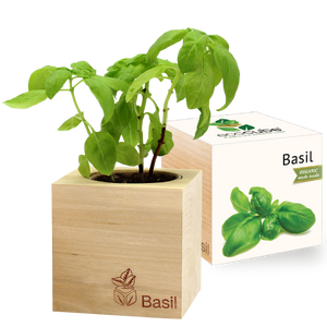 Grow Kit - Basil