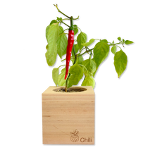 Load image into Gallery viewer, Grow Kit - Chili