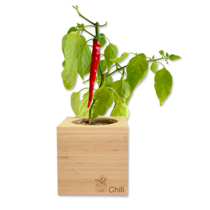 Grow Kit - Chili