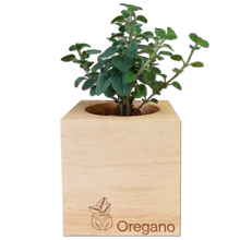 Load image into Gallery viewer, EcoCube - Oregano