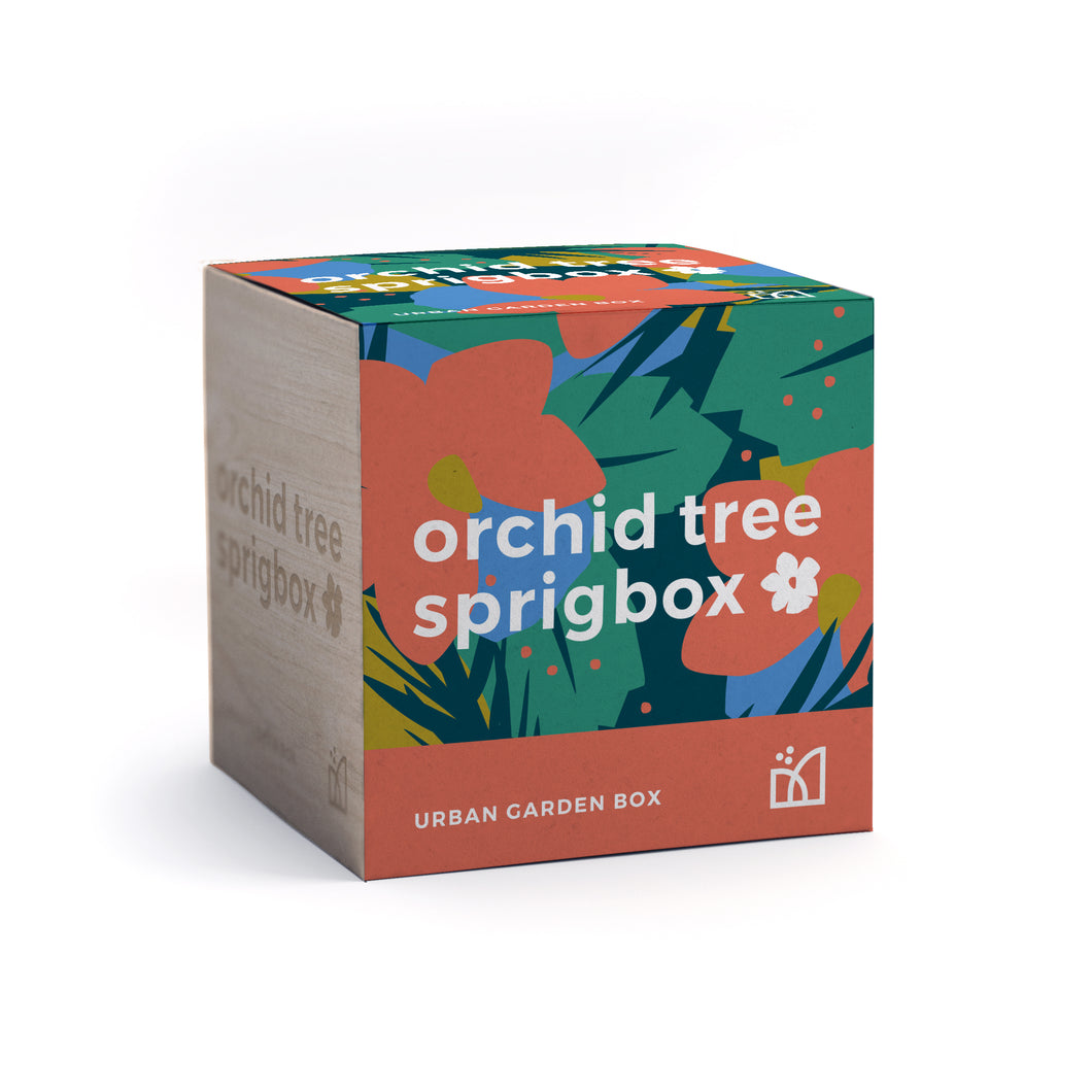 Grow Kit - Orchid Tree
