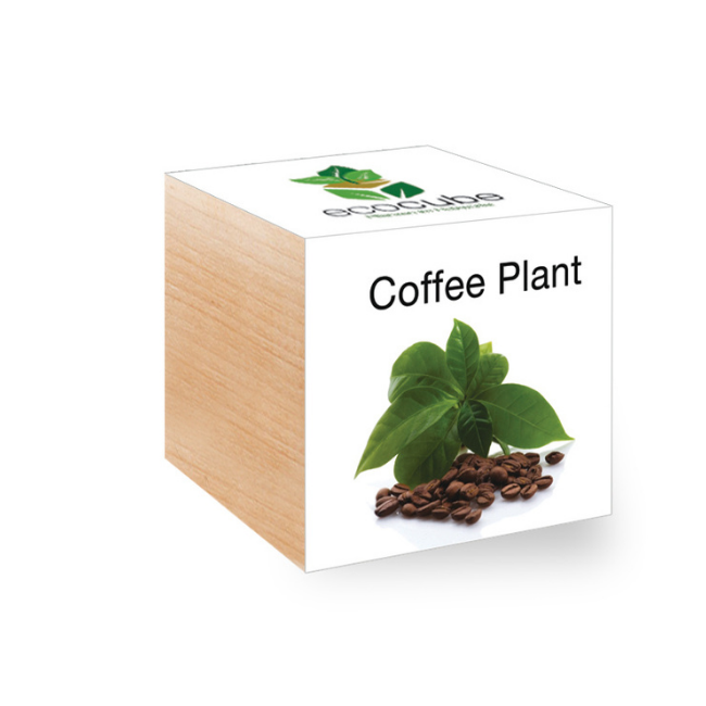 Grow Kit - Coffee Plant