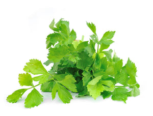 Grow Kit - Cilantro