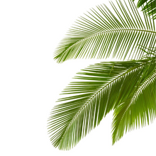 Load image into Gallery viewer, Grow Kit - Palm Tree