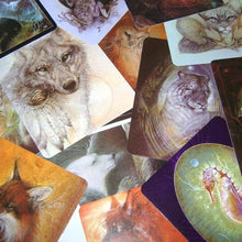Load image into Gallery viewer, Animal Spirits Knowledge Cards [Susan Seddon-Boulet]