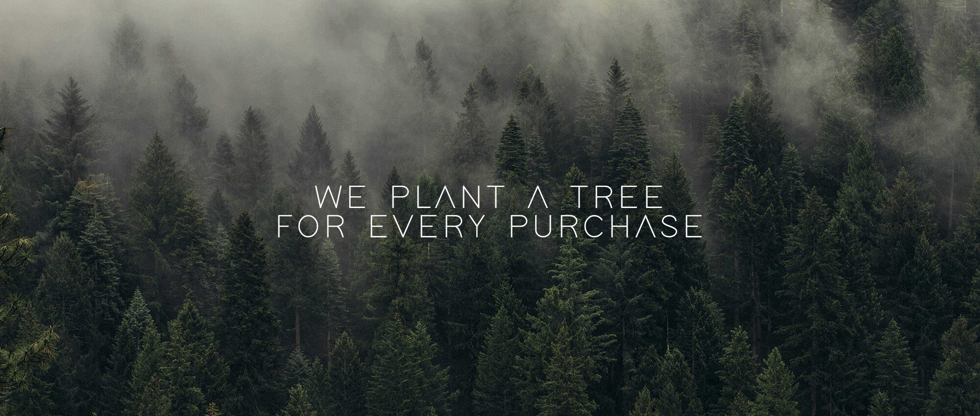 MADOW plants a tree for every purchase