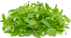 Micro Coriander - Capital Wholesalers