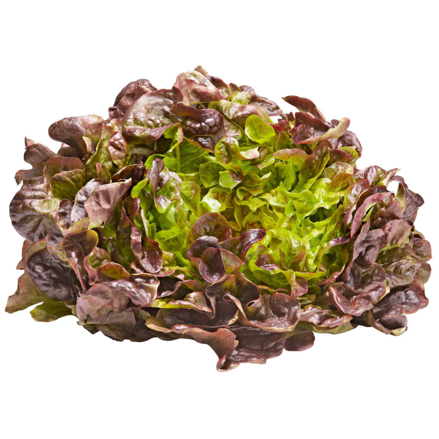 Oak Leaf Lettuce - Capital Wholesalers