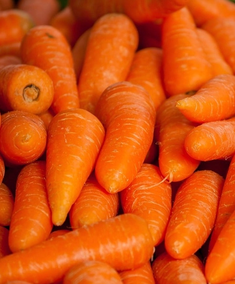 Chantenay Carrots - Capital Wholesalers