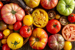 Load image into Gallery viewer, Isle of Wight Heritage Tomatoes, 500g