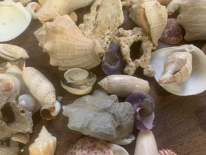 Group of Sea Shells