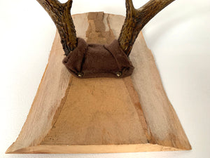 Large Antlers Mounted on Wood Plaque