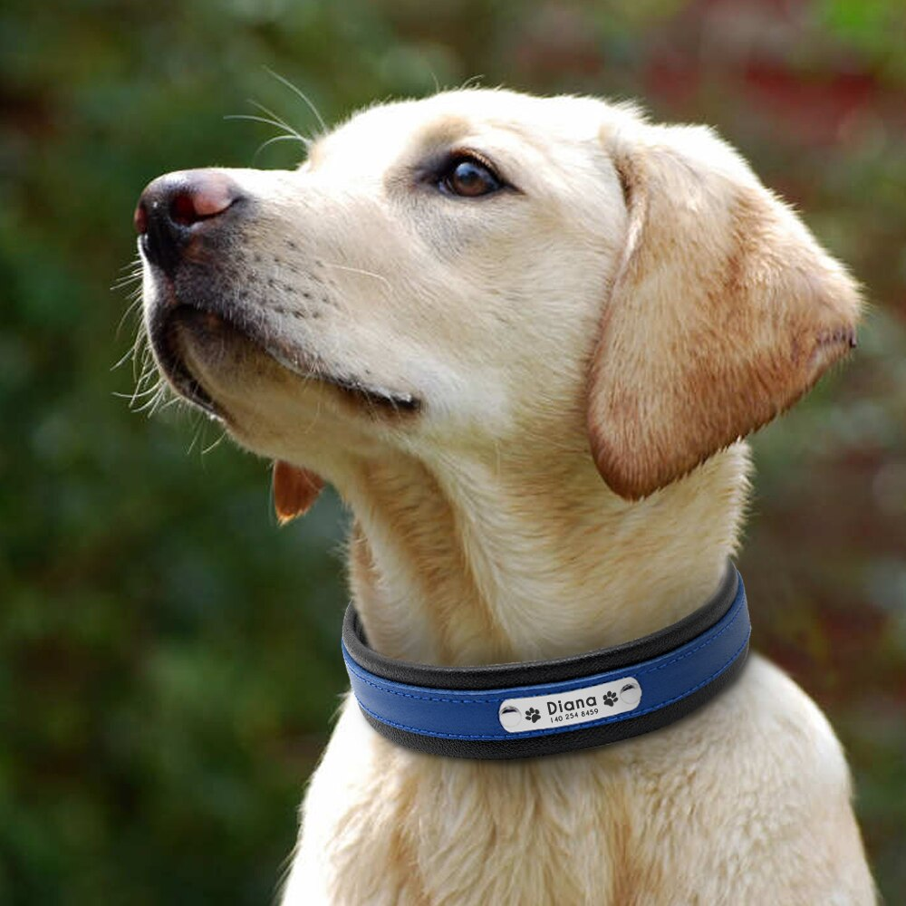 Leather Dog Collars | Best leather collars for dog training - Wise Pets