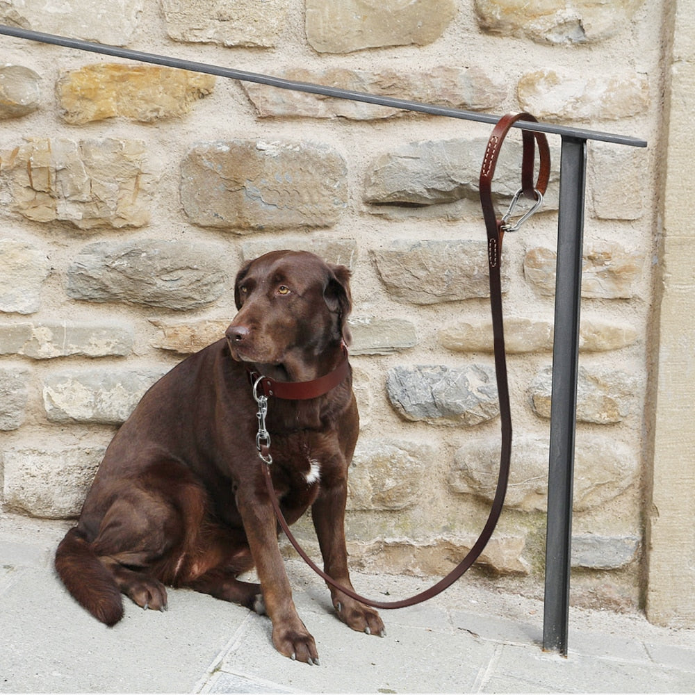 Best  leather  leash for dogs - Wise Pets