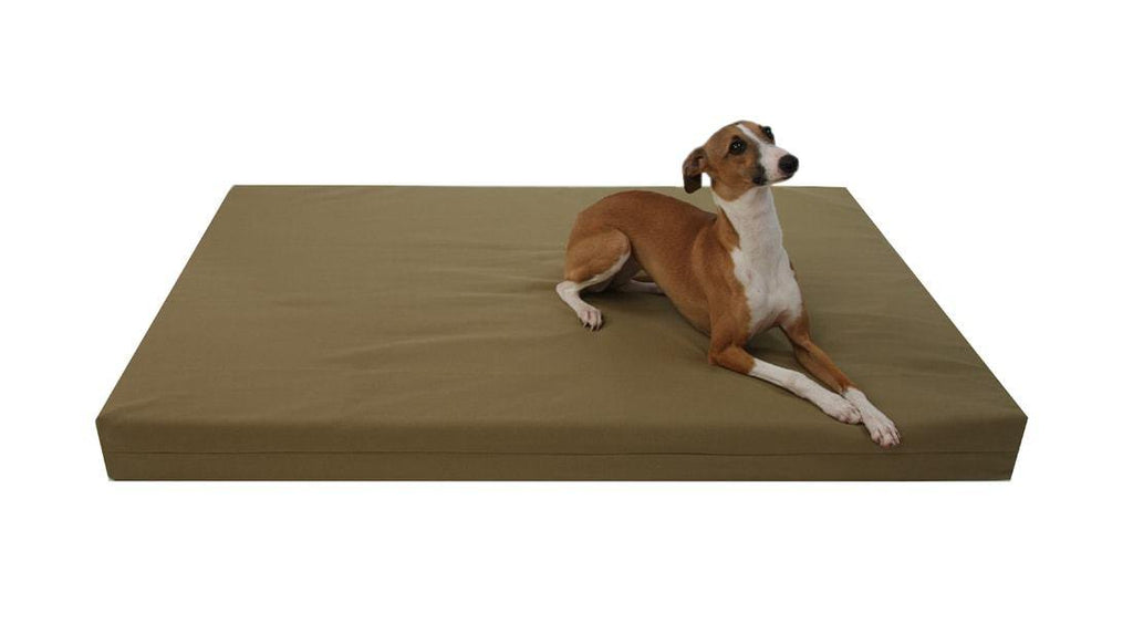 greyhound dog laying on organic cotton dog bed in olive color