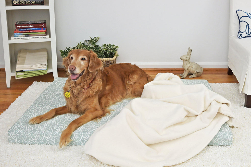 golden retriever laying on light blue green orthopedic dog bed