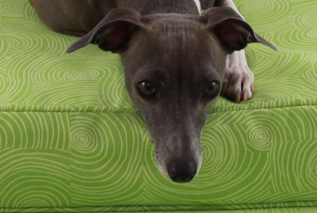 dog laying on tailored orthopedic dog bed lime pattern
