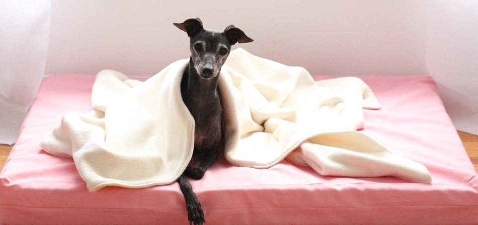 dog laying on organic orthopedic pink dog bed with natural fleece dog blanket