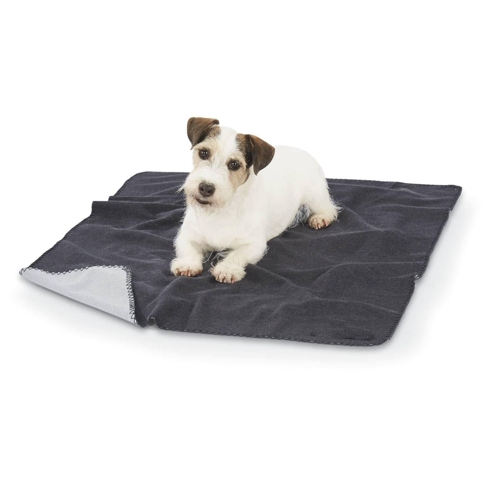 small terrier on dog blanket