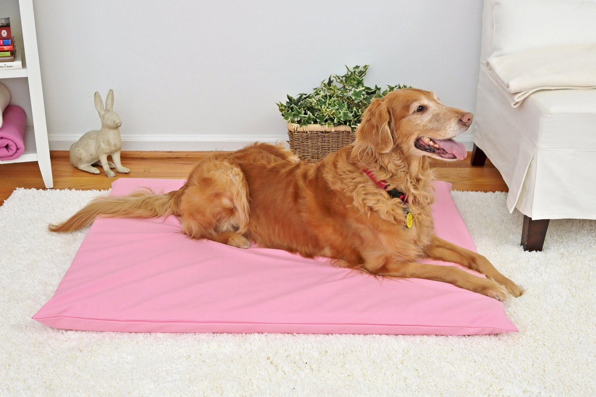 Golden retriever on a pink dog mat in a white room