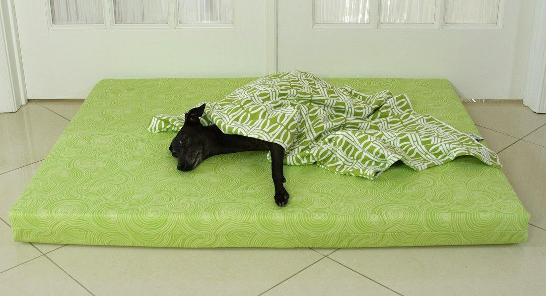 black dog laying on green orthopedic dog bed in lime with green blanket