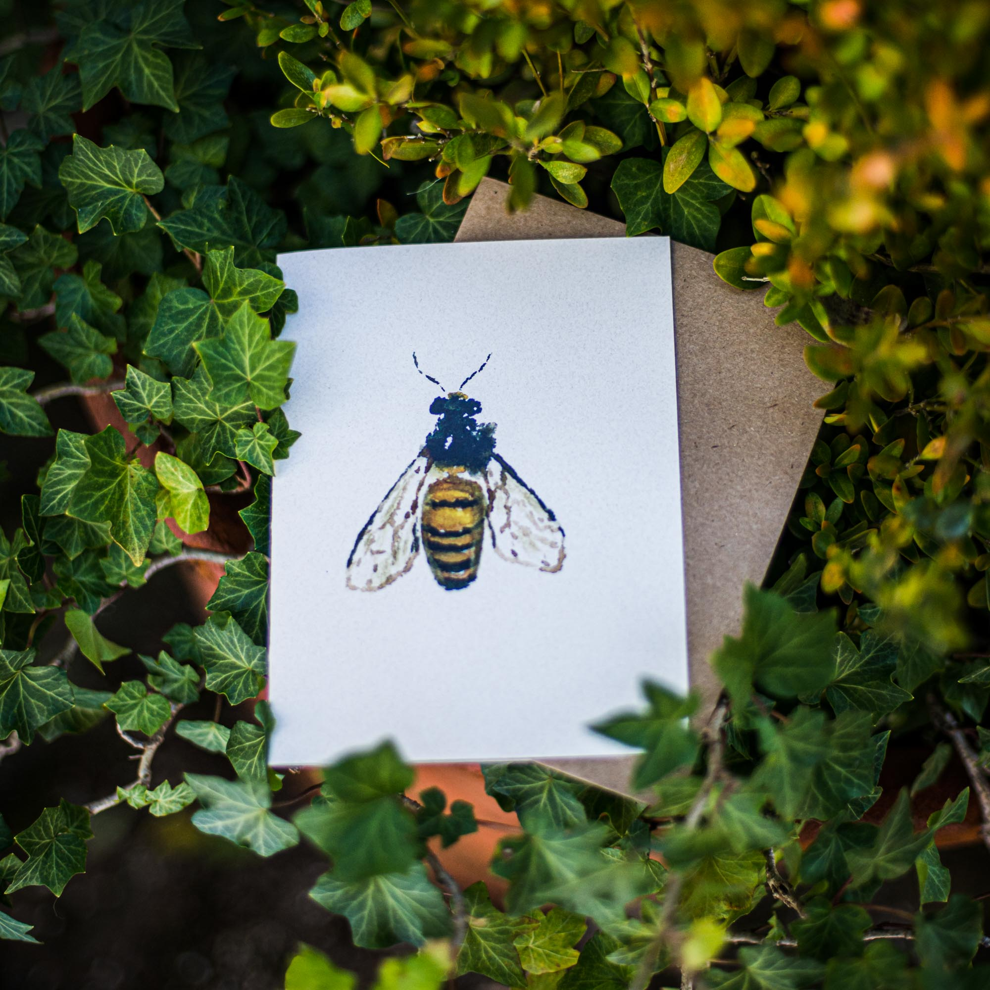 Nature Greeting Cards by Artist Maria Pace