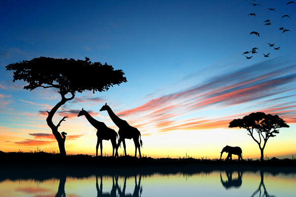 Giraffes & Elephant of Africa