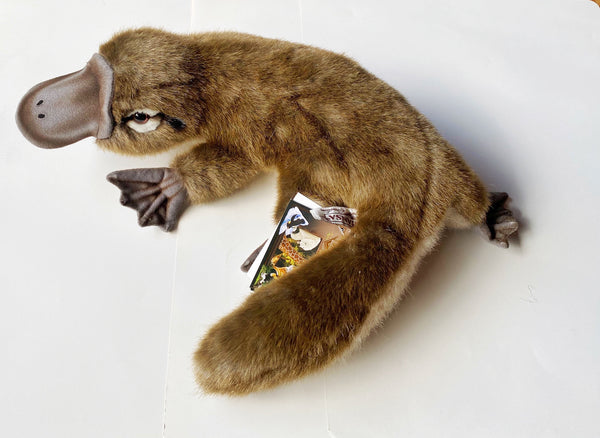 Hansa platypus is a real life soft toy, 40 cm.