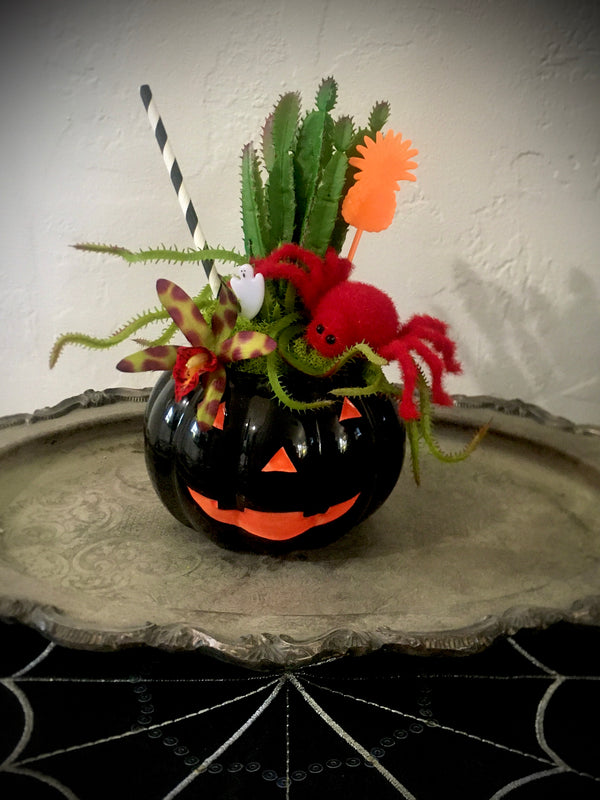 """Itsy Bitsy Spider""  - Halloween Tiki Cocktail Plant"