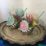 """Mermaid Cave"" - Mermaid Tiki Cocktail Plant"
