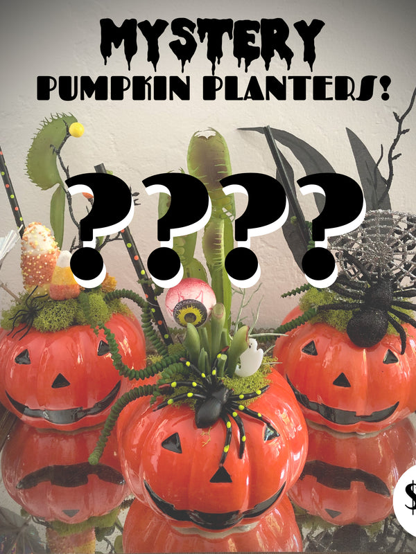 MYSTERY Pumpkin - Tiki Cocktail Plant