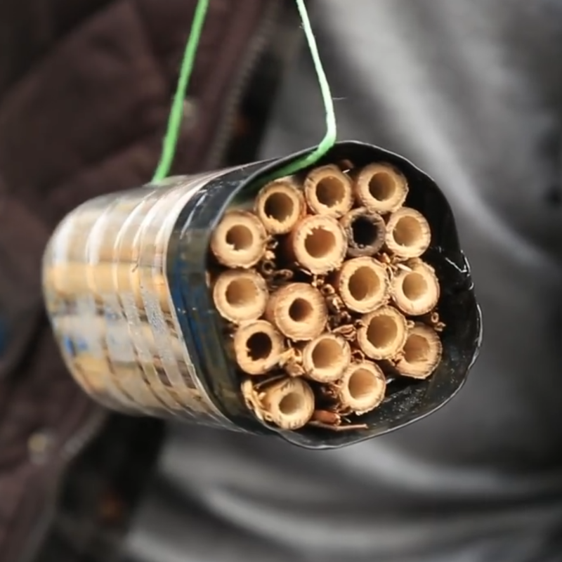 bee hotel upcycle plastic bottles