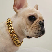 Gold Cuban Dog Chain Collar - Nekua - 4