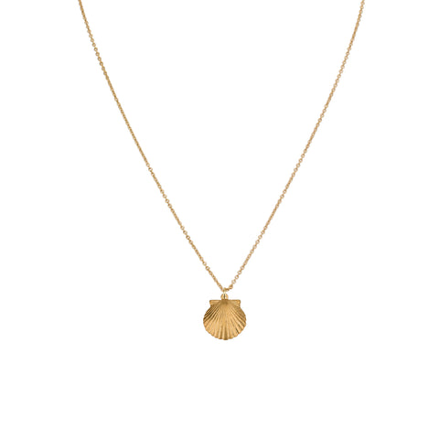 Necklaces - Big Shell Pendant & Helen Chain Necklace