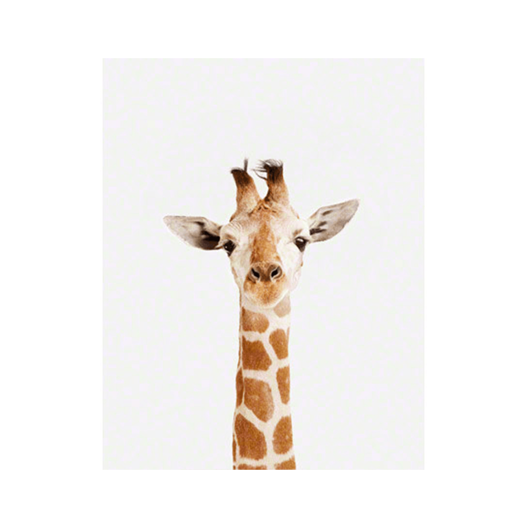- Baby Giraffe Little Darling Print – Project Nursery