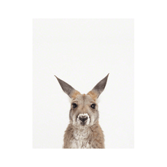 Baby Kangaroo Little Darling Print - Project Nursery