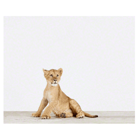 Lion Cub Little Darling Print