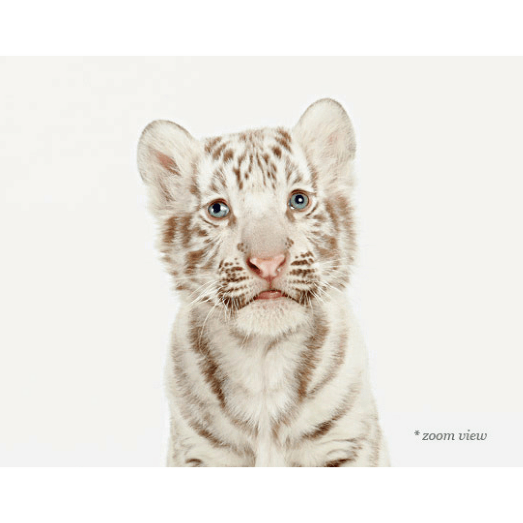 Baby White Tiger Print - Project Nursery