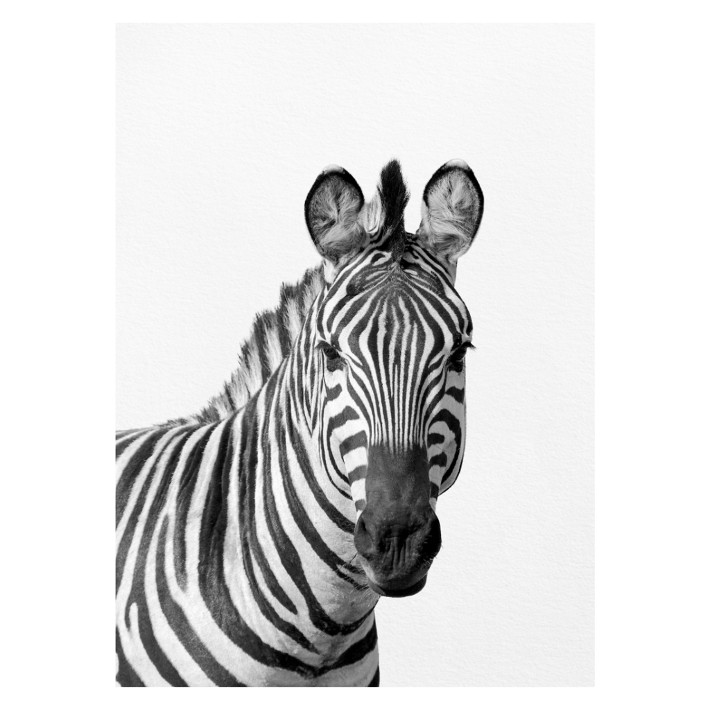 Black and White Zebra Print - Project Nursery