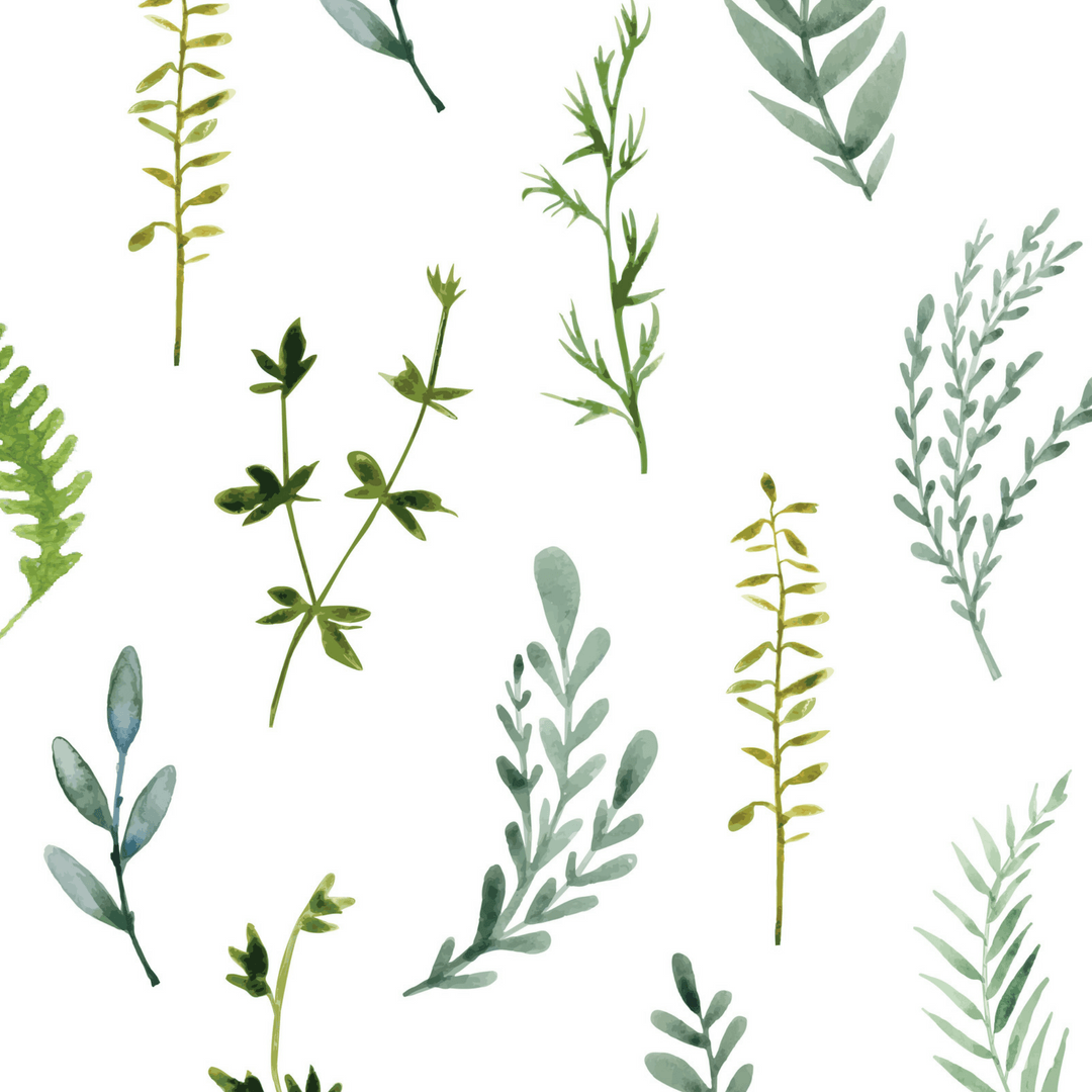Botanical Foliage Wall Decals - Project Nursery