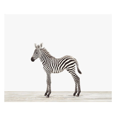 Baby Zebra Little Darling Print