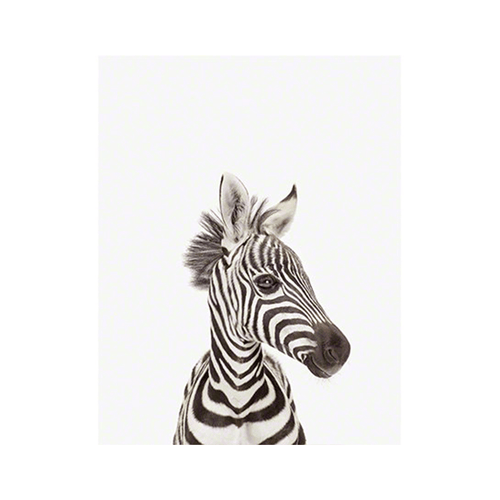 Baby Zebra Little Darling Print - Project Nursery
