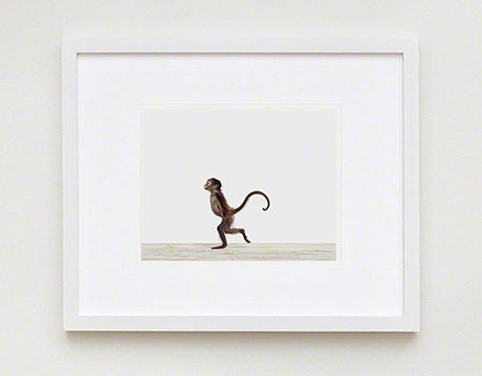 Baby Monkey Print - Project Nursery