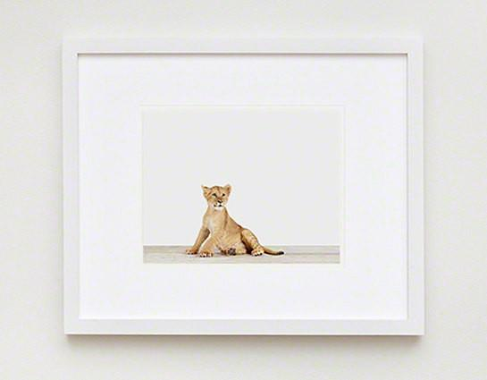 Lion Cub Print - Project Nursery