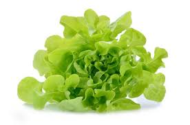 green oak lettuce ea