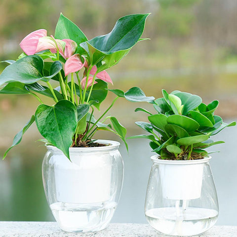 Carefree Self Watering Flowerpot