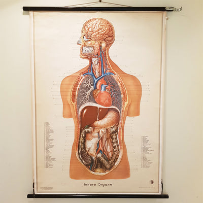 German Anatomical Chart