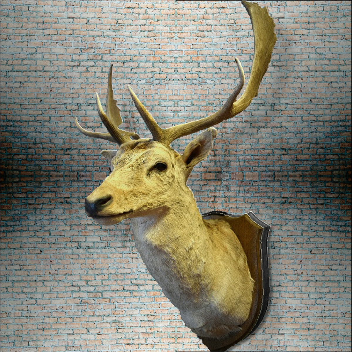White Roe Deer Buck Shoulder Mount