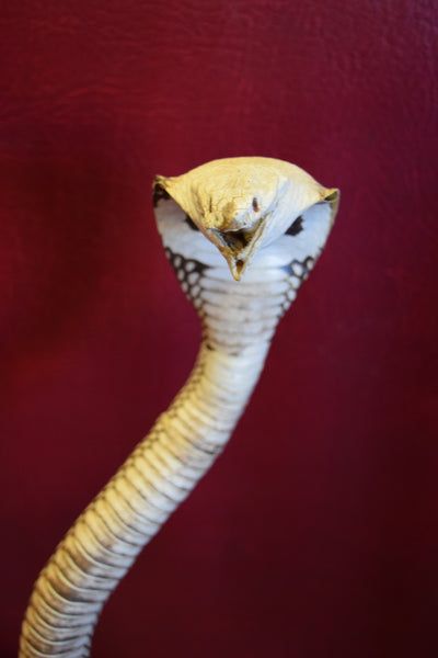 Taxidermy Cobra